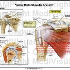 Immune System Diagram Software For Wiring Diagrams Medivisuals Normal Right Shoulder Anatomy Medical Illustration