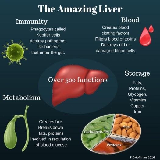 Purpose Of Liver