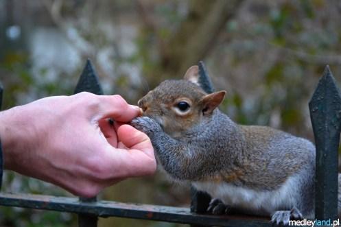 Dobrze, że w pobliżu jest zawsze ktoś odważny :)