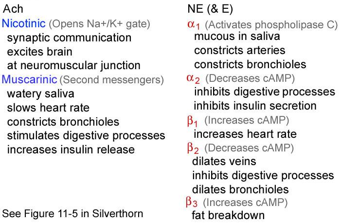 Adrenergic agonists — Medlibes: Online Medical Library