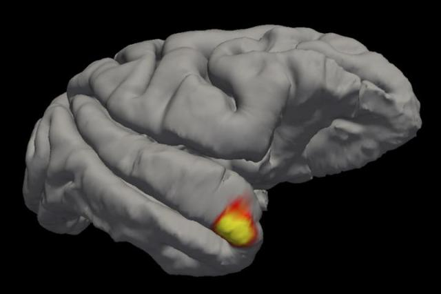 Researchers discover new type of memory cells in the brain specific to facial recognition