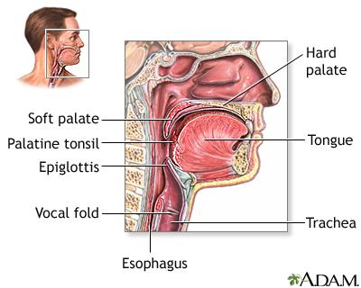 throat anatomy diagram narva 175 spotlight wiring medlineplus medical encyclopedia image