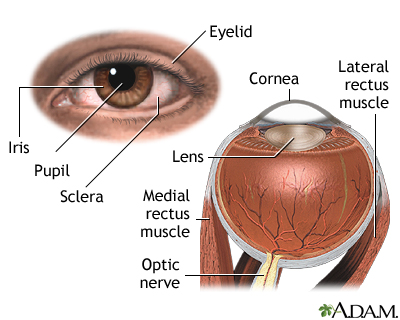 External And Internal Eye Anatomy MedlinePlus Medical