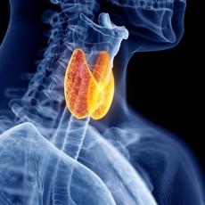 Solucionar problemas de la tiroides con remedios