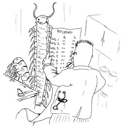 Best book learn neuroanatomy
