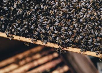 lijećenje pčela