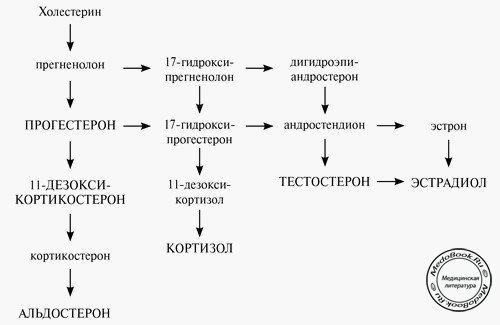 Биосинтез стероидных гормонов