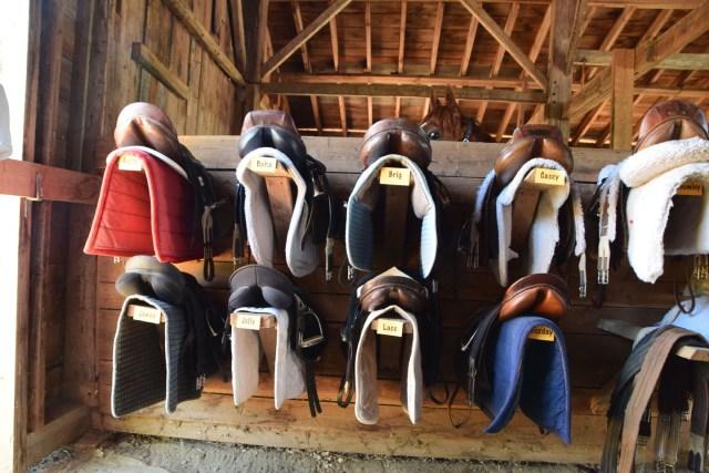 horses saddles