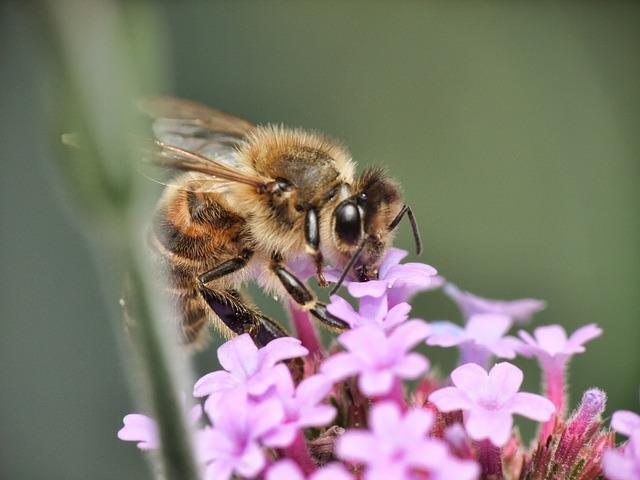 Kreiran prvi pcela dron za oprasivanje! CATCH THE BUZZ - Creation of robot bee to pollinate crops | Bee Culture