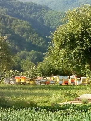 S.Stojanović Moj način rada sa FR košnicom na suncokretovoj paši...