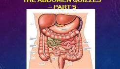 The Abdomen quizzes 5