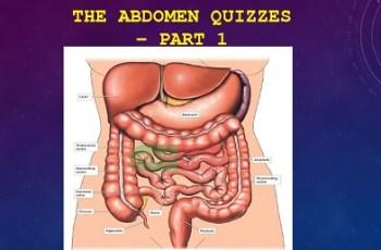 The Abdomen
