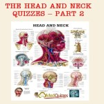 The Head and Neck Quizzes – Part 3