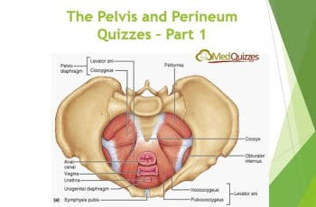 The Pelvis and Perineum Quizzes 1