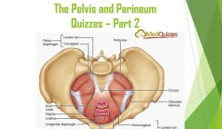 The Pelvis and Perineum Quizzes 2