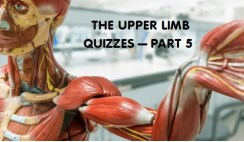 The Upper Limb 5