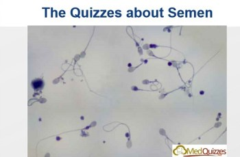 The quizzes about Semen