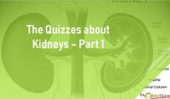 The Quizzes about Kidneys