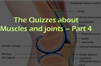 The Quizzes about Muscles and joints – Part 4