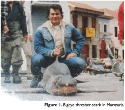 """squalo volpe """"occhione"""": nuove segnalazioni di uno squalo pressocché sconosciuto in Mediterraneo"""