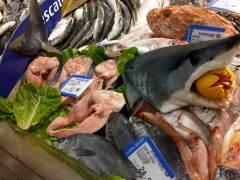 eleonora de sabata:MedSharks_mako shark on sale in Italy copia
