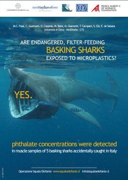 Poster presentato a Berlino al convegno dell'UE sui rifiuti in mare, che mostra come le microplastiche siano una minaccia per gli squali elefante (e non solo)