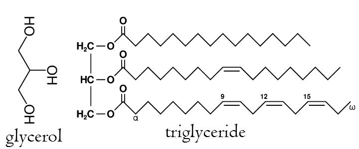 triglyceride glycerol