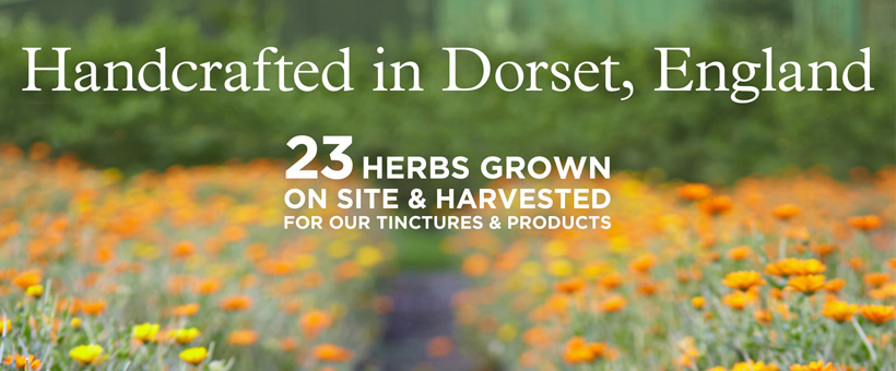 Home grown in Dorset - NYRO