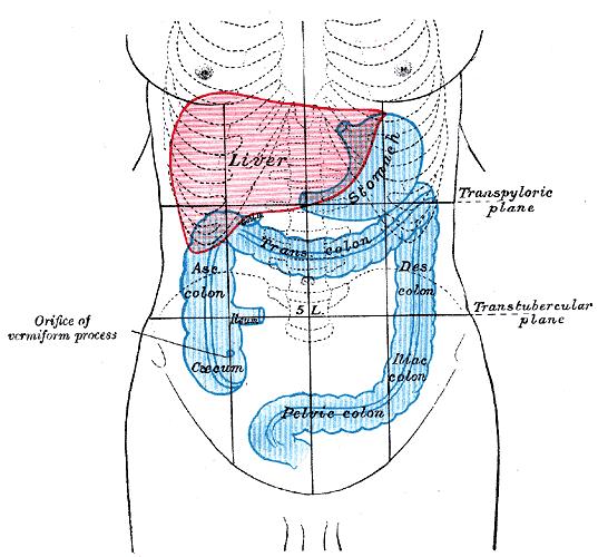 where are your appendix located diagram 3 ring venn template zaparcie, obstrukcja, zatwardzenie. dlaczego nie chce to wyjść? | meduzo