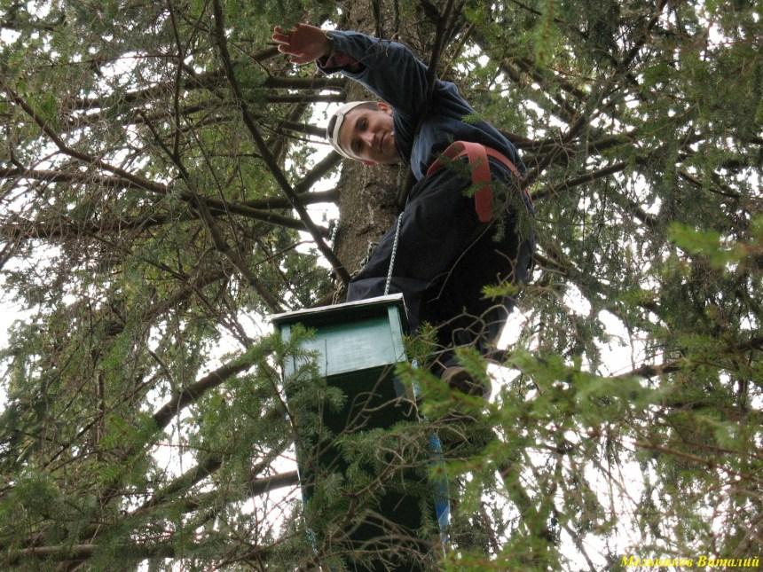 на дереве с ловушкой