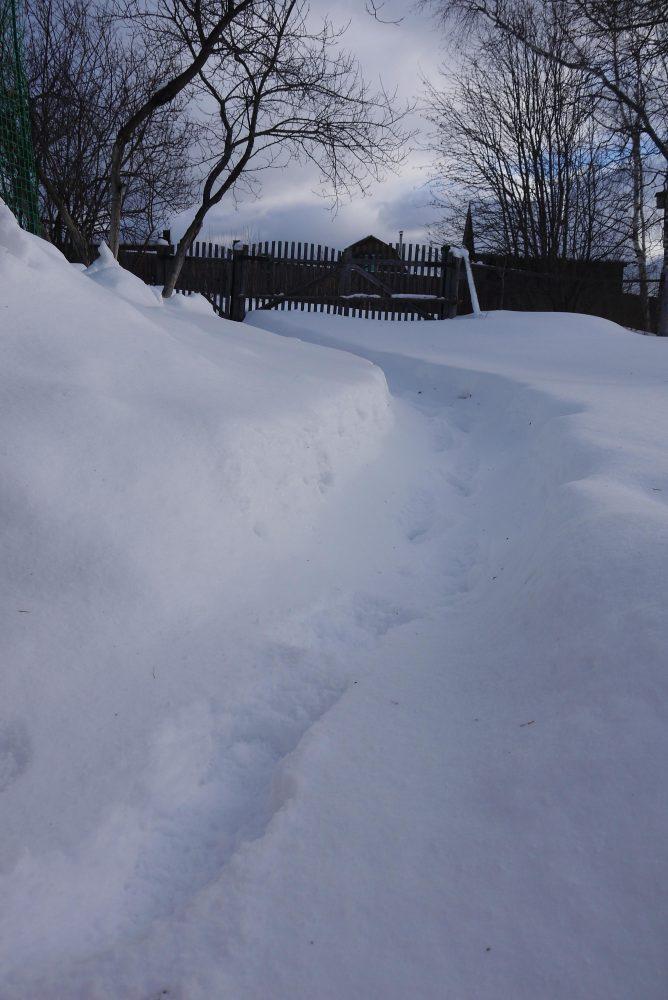 зимняя тропка