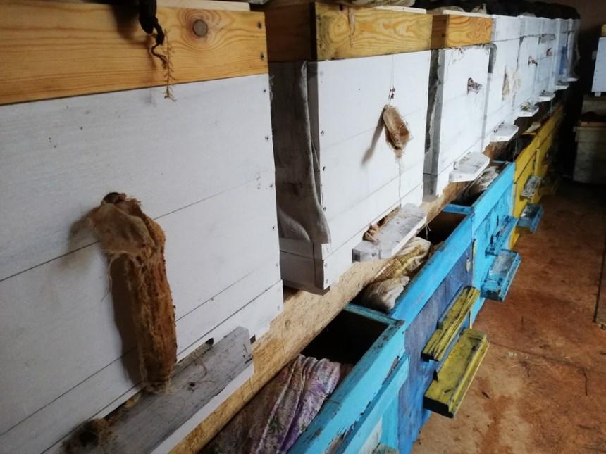 пчелиные семьи в зимовнике окончание пчеловодного сезона