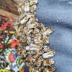 пчелы поднялись под подушку в улье