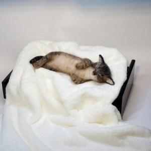 ベッドでうたた寝するネコ 羊毛フェルトの作品です