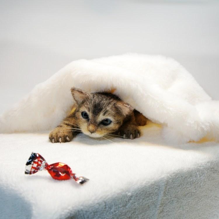 キャンディーを狙っているネコさんです。羊毛フェルトの作品です。