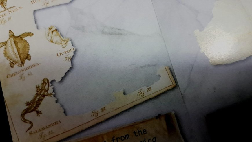 Torn pages from a book
