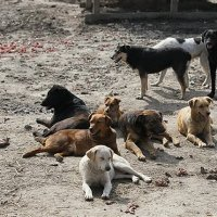 What we need to learn from India on Dog population management