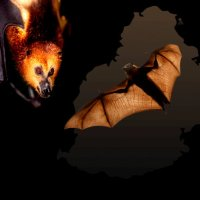 Open letter to Her Excellency, the President of the Republic of Mauritius - Mrs Ameenah Gurib-Fakim on the culling of the Mauritian bats