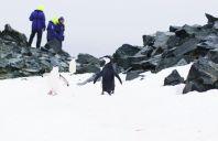 Menschen und Pinguine