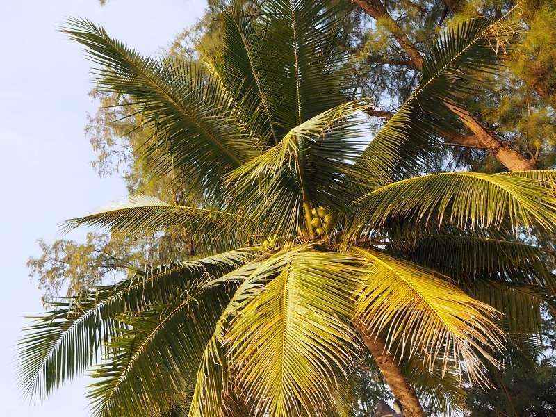 Insel der Kokosnüsse