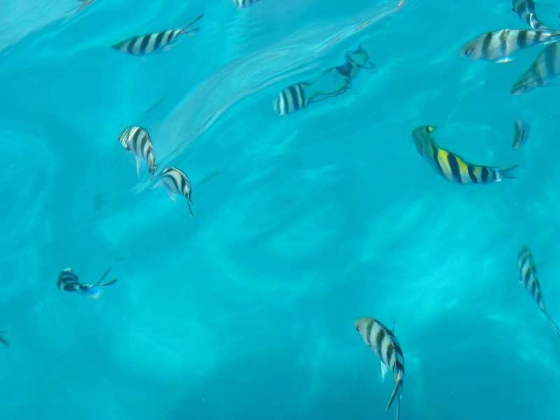 Die Welt der Fische