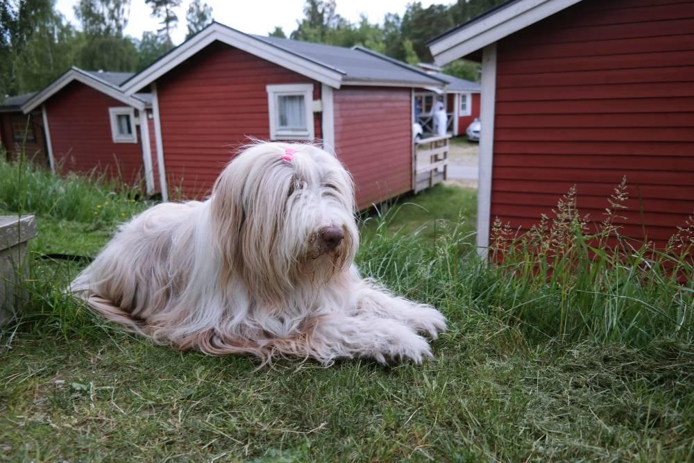 Hund vor der Hütte
