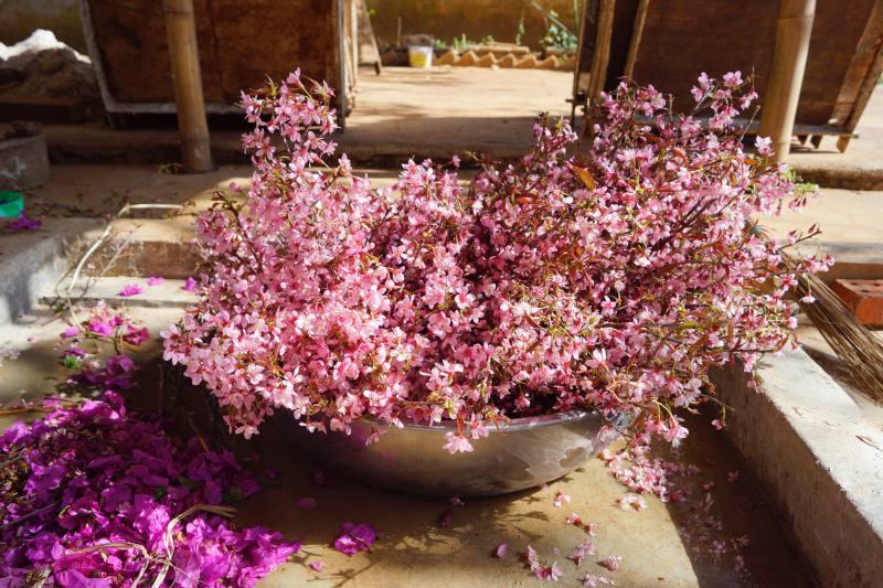 Die Kirschblüten