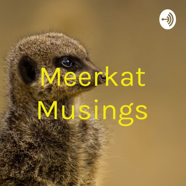 Meerkat Musings on 2021!