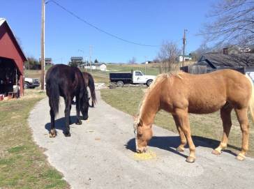 Just horsin' around