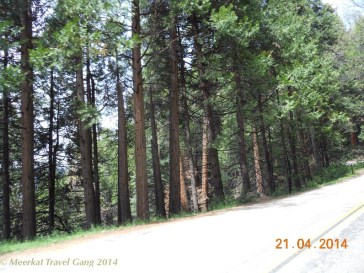 Driving through sequoia forest