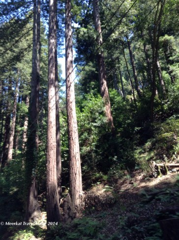 Forest surrounding Point Reyes