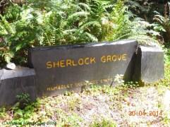 Sherlock Grove