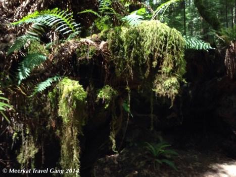 Greenery everywhere - moss, fern, vines...