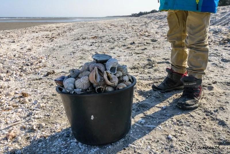 Muscheln Sæby Strand Ostsee Urlaub mit Kindern